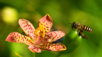 bee gathering nectar and pollen