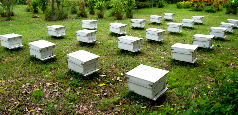 commercial beehives